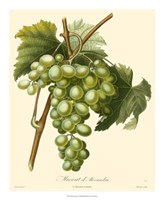 "Grapes I by Pancrace Bessa - 18"" x 22"""
