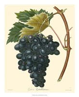 "Grapes II by Pancrace Bessa - 18"" x 22"""