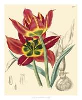 """Elegant Tulips I by Vision Studio - 18"""" x 22"""""""