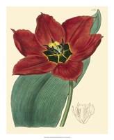 "Elegant Tulips III by Vision Studio - 18"" x 22"""