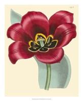 """Elegant Tulips IV by Vision Studio - 18"""" x 22"""""""