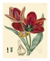 """Elegant Tulips V by Vision Studio - 18"""" x 22"""""""