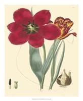 "Elegant Tulips VI by Vision Studio - 18"" x 22"""