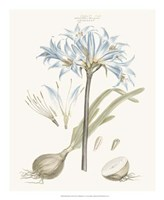 Bashful Blue Florals II Fine Art Print