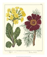 Gardener's Delight II Fine Art Print