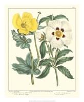 Gardener's Delight III Fine Art Print