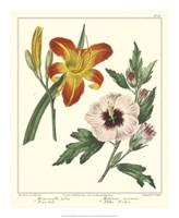 Gardener's Delight IV Fine Art Print