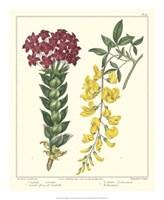 Gardener's Delight V Fine Art Print