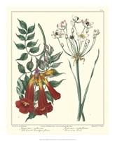 Gardener's Delight VI Fine Art Print