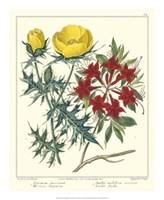 Gardener's Delight VII Fine Art Print
