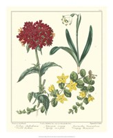 Gardener's Delight VIII Fine Art Print