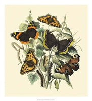 """Butterfly Gathering II by Vision Studio - 20"""" x 22"""""""