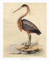 """Antique Heron II - 18"""" x 22"""""""