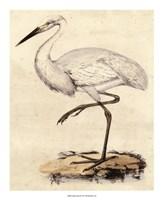 """Antique Heron III - 18"""" x 22"""""""