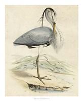 "Antique Heron IV - 18"" x 22"""