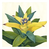 """Tropical Bloom II by Megan Meagher - 22"""" x 22"""", FulcrumGallery.com brand"""