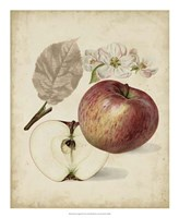 Harvest Apples II Fine Art Print