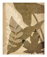 "Pressed Leaf Assemblage I by Vision Studio - 18"" x 22"" - $27.99"