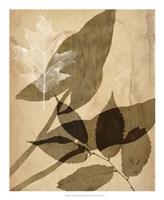 "Pressed Leaf Assemblage II by Vision Studio - 18"" x 22"" - $27.99"