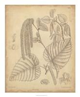 Vintage Curtis Botanical II Fine Art Print