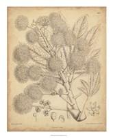 Vintage Curtis Botanical IV Fine Art Print