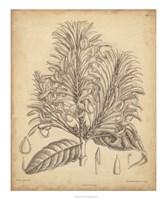 Vintage Curtis Botanical V Fine Art Print