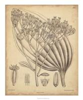 Vintage Curtis Botanical VI Fine Art Print
