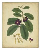 Botanical IV Fine Art Print