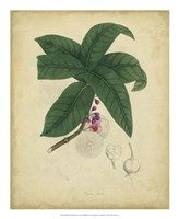 Botanical V Fine Art Print