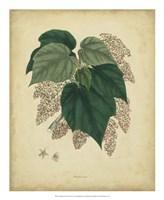 Botanical VII Fine Art Print