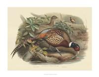 Pheasants I Fine Art Print