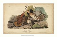"Audubon Ruffed Grouse by John James Audubon - 34"" x 22"""