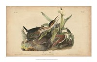 "Audubon Green Heron by John James Audubon - 34"" x 22"""