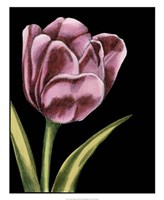Vibrant Tulips III Fine Art Print