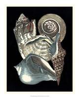"Seashell Anthology I by Vision Studio - 18"" x 22"", FulcrumGallery.com brand"