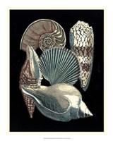 "Seashell Anthology II by Vision Studio - 18"" x 22"", FulcrumGallery.com brand"