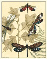 Graphic Dragonflies in Nature I by Megan Meagher - various sizes