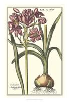 "16"" x 23"" Floral Botanical"