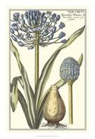 "Botanical Beauty II by Vision Studio - 16"" x 23"""