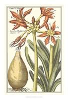 "Botanical Beauty III by Vision Studio - 16"" x 23"""