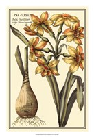 "Botanical Beauty IV by Vision Studio - 16"" x 23"""