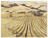 Summer Vineyard Framed Print