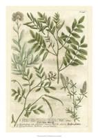Weinmann's Garden II Fine Art Print