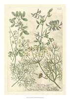 Weinmann's Garden IV Fine Art Print