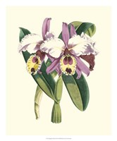 """20"""" x 24"""" Orchid Pictures"""