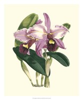 """Magnificent Orchid III by Vision Studio - 20"""" x 24"""""""
