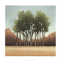 """Stand of Trees I by Ethan Harper - 24"""" x 24"""", FulcrumGallery.com brand"""