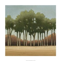 """Stand of Trees II by Ethan Harper - 24"""" x 24"""", FulcrumGallery.com brand"""