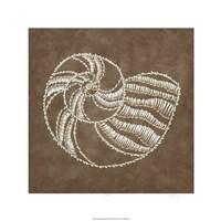 "Embroidered Shells II by Chariklia Zarris - 24"" x 24"""