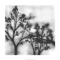 "Silvery Trees I by Jennifer Goldberger - 24"" x 24"", FulcrumGallery.com brand"